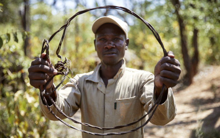 Snares found in Hwange NP