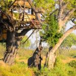 Delta Camp Tree House