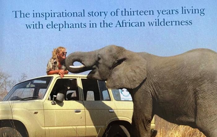 Elephant Dawn by Sharon Pincott