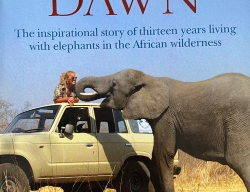 Safari Dreaming with Elephant Dawn by Sharon Pincott