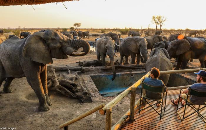 Elephants at Nehimba
