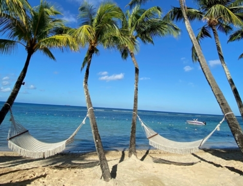 On World Oceans Day, let's take a look at Mauritius🐬🐠🐚