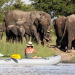 Canoeing with the elephants @ Bomani, Hwange NP