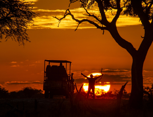 Stay a while in Hwange – Meagan's story