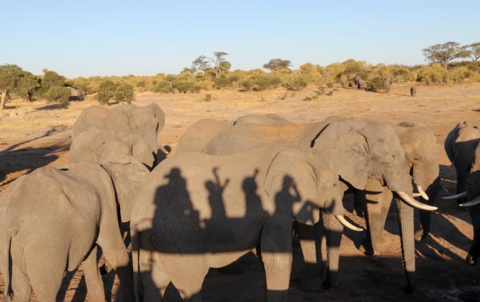 Ride a magic carpet to Jozibanini, Hwange NP, Zimbabwe