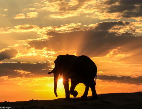 The Hwange specialist Imvelo Safari Lodges, Zimbabwe🐘🐘🐘