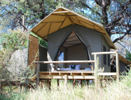 New Tents in the Delta