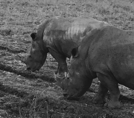 Rhino in Nairobi National Park