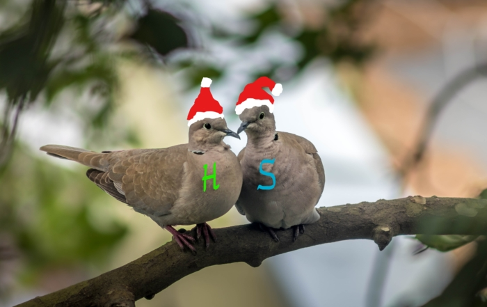 2 Turtle Doves - Helen & Sally
